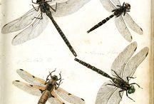 Philip Henry Gosse - Entomologia Terrae Novae
