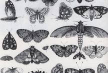 REFERENCE INSECTS