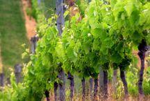 Bere / Scopri con noi i vini della tradizione italiana.