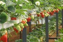 Emeletes termesztés
