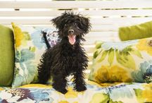 Pet Photography / Photos of beautiful pets shot by Lori Black of Moments in Time Images.