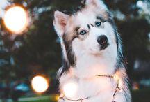 joulueläin kuvat