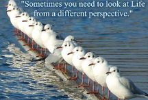 Coaching & Leadership / Articles/humor related to Coaching & Leadership
