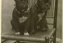 French Bulldogs Vintage / French Bulldogs Vintage