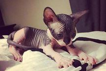 Cat ❤❤