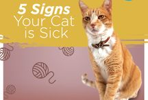 Cat Care / Top tips to help you care for your cat and insight into health issues they may face / by ASPCA Pet Health Insurance