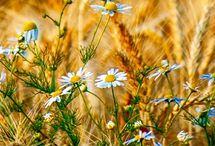 Divorastúce kvety