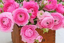 Ador florile...