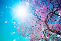 Spring / Yay spring