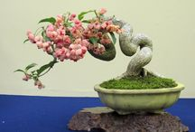 Shohin&Mame bonsai