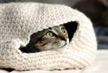 γατακι