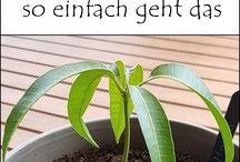 Kasvit/Kukat