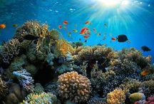 Underwater Love - lastminute.de