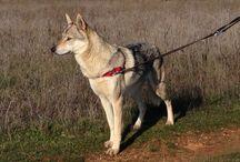 Ira Von der Wolfsschleife