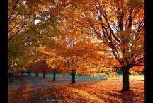 Autumn - jeseň