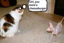 Girl, you                                                     need a                                                    cheeseburger / She is so skinny.