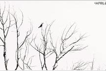 Pretty Bird Photos