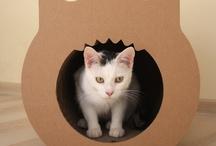 Dla kota / akcesoria dla kota