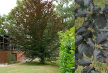 TOP10 Shade Trees / Need shade ?  Our Top 10 recommendations