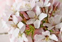 Garden Flowers....