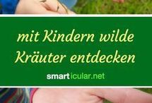 Kräuter