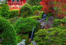Japanese Tea Gardens / Japanese tea gardens were specifically designed for meditation and contemplation before the tea ceremony. Revel in the beauty of these timeless creations.