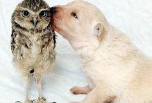 Tier-Freunde