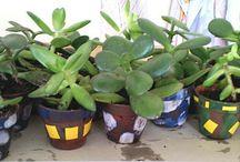 PČ - pěstitelské práce / Pěstování rostlin ze semen v místnosti, pěstování pokojových rostlin, rozmnožování pokojových rostlin řízkováním, základní podmínky pro pěstování rostlin - půda, výživa, osivo ...