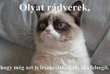 A világ legundokabb macskája grumpy cat.