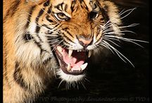 Wild animals / Favorite shots of wild animals!