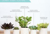 Plants For The Home // Zallzo.com
