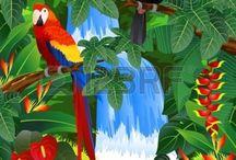 kuş tabloları