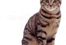 cat pics 4 art
