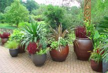 Great gardening ideas / innovative ideas for plants, flowers and outdoor spaces