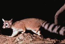 Wildlife: (Land) Mammals