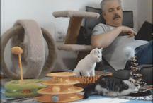 Katzen <3