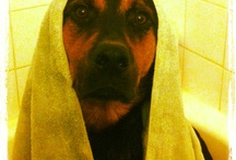 Lecter ( my dog)