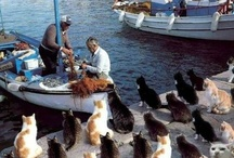 Greek Cats / The best cats around Greece...