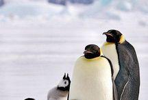 Dieren / Pinguïns