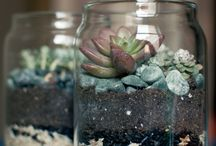 Succulents / by Gardens on the Prairie