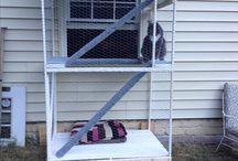 DIY für Haustiere
