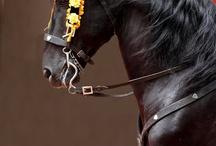 Horse +Fuerza!!