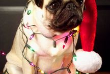 The Funniest Pug Photos