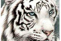 bílí tigři