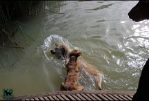Crazy aqua days! - K9 Heaven troopers going bonkers at their doggy lake! / Snapshots of our campers & daycares going Navy Seal!