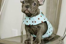 puppys:)!