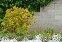 Galets de MER / Réalisation de massifs avec des galets de mer de la côte Picarde, exemple d'utilisation en maçonnerie également. Retrouver ce produit sur galeice.com