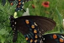 Flutterbys / Pretty, fragile winged things / by Michele Sarra Scott