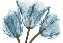 рентген цветы