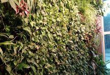 Zielone ściany do wnętrz / Przykładowe realizacje zielonych ścian we wnętrzach.